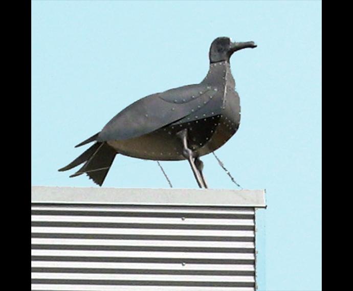 bird-building2