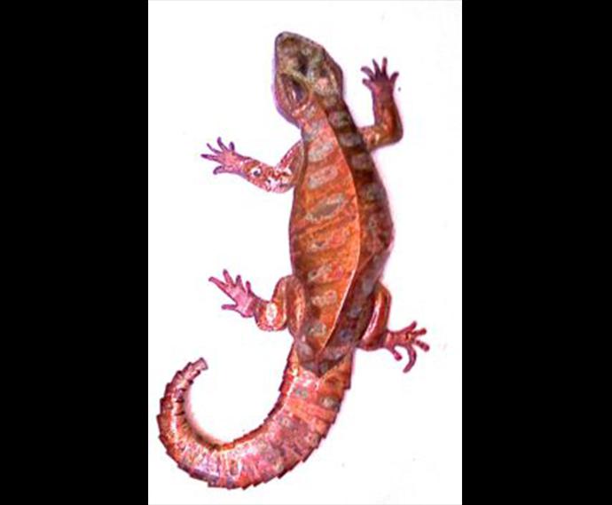 Moroccan Lizard